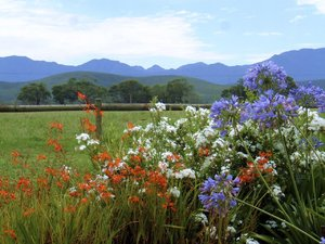 South African mountains: Flowers in South african game reserve, outside Port Elisabeth, South Africa, 2004
