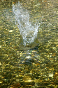 Splash 1: Splash in a shallow stream.NB: Credit to read