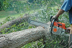 Chainsaws in action. 2