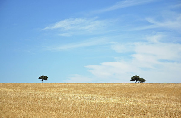 Lonliest Tree II 1: More of the same field and tree I shot before, but now with yellow grass (Red dust before).NB: Credit to read