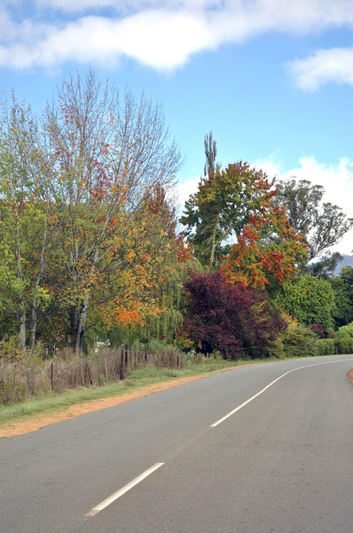 Autumn Road: A rural road in Autumn (or Fall) in the Karoo, South Africa. Beautifull oranges, reds and yellows.NB: Credit to read