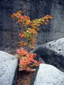 young autumn tree: Who would have thought that such a young tree could survive in such a ghastly environment?