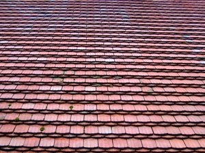 "beaver's tails roof tiles: some more roof tiles - these ones are called ""beaver's tails"""