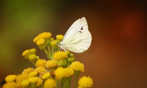 Small butterfly on flower: a small butterfly on vivid background