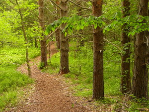 Wooded path: Winding path through the woods in Wolfville, Nova Scotia, Canada