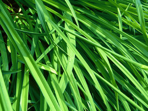 Tall grass: This was a a really great color in the bright sun! I love summer! :-)
