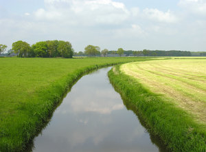 Dutch grassland with water
