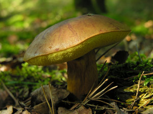 mushroom: Just mushrooms i a forest in the Netherlands. :-)
