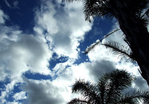 topical clouds: darkening sky and bright clouds above palms
