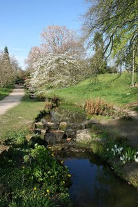 Water gardens: A water garden in parkland in West Sussex, England, in spring.
