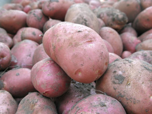 farm potatoes