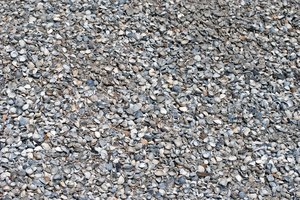 Shell path: sea shell floor