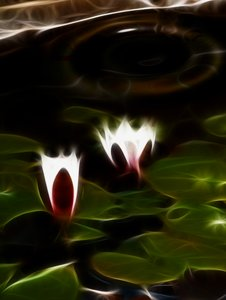 If water lillies could light u