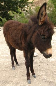 Donkey Foal: no description