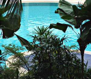 by the pool: cool tropical vegetation at estate swimming pool