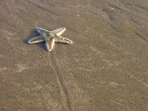 starfish 1: All of my non human subject photos are unrestricted so you do not need to contact me for permission. If you are planning on using a photo with people, please contact me in advance. Please mind that I will not allow them to be used for any religious purpos