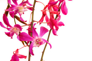 orchids: All of my non human subject photos are unrestricted so you do not need to contact me for permission. If you are planning on using a photo with people, please contact me in advance. Please mind that I will not allow them to be used for any religious purpos