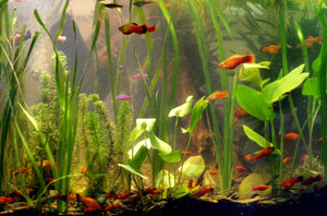 planted aquarium: no description