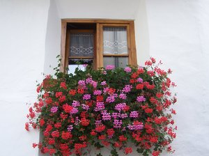 WINDOW AND FLOWERS: No description