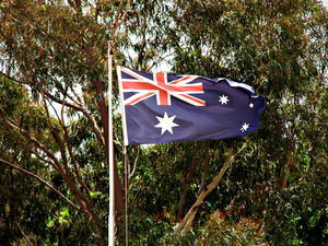 Aussie icons - gum trees & fla: Australian icons - eucalyptus trees and Australian flag