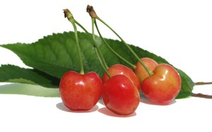 cherries and leaves: none