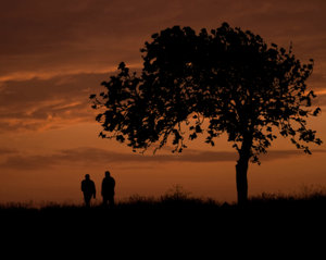 Sunset Stroll: Deep orange sunset, a hawthorn tree and two friends enjoying a walk.