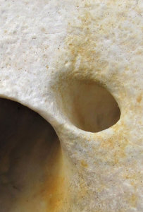 shell shock-et: underside of turban shell showing socket-like holes