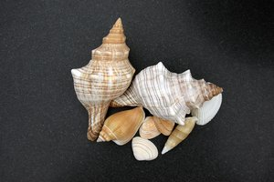 shells: no description