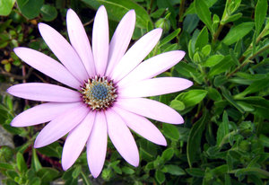 daisy: No description