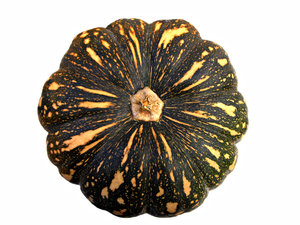 pumpkins: Australian mottled 'Japanese' pumpkin - Ken&acirc;s Special