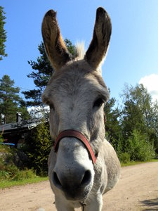 Donkey: no description