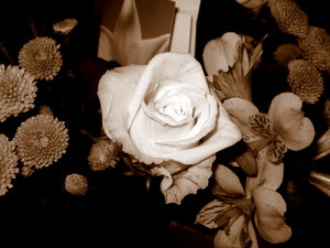 Sepia roses: no description