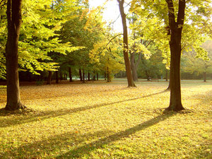 autumn park: only a park