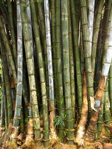 Bamboo Groove: no description