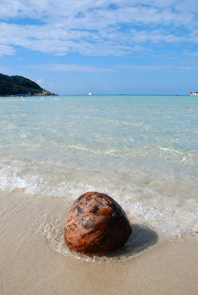coconut: washed ashore...