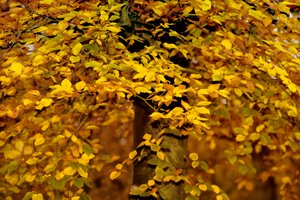 Forest fall: forest leaves in autumn
