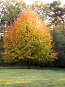 autumn tree: autumn tree
