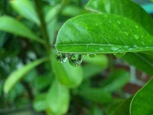 Raindrops: After rain
