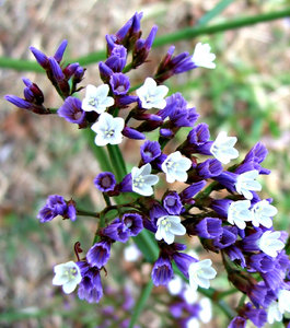 Common Purple Garden Flowers free stock photos - rgbstock - free stock images | bright white