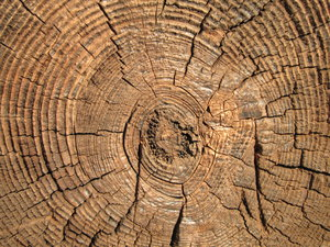 log: no description
