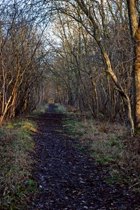 wood: A dark wood in Rutland, England, taken in Winter's low cold light.