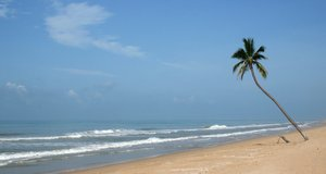 Lone tree: A single coconut tree on the beach on Hainan Island, south China.