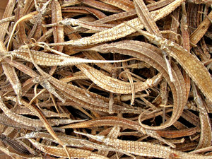 dried pipefish for sale: dried pipefish for sale for food and medicinal purposes