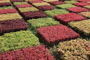 Plant patterns: Geometric patterns in an herbaceous border in a garden in Madeira.