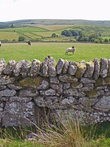 dartmoor - fields