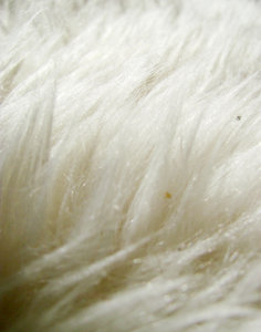 Sheep skin texture 3: sheep hair closeup
