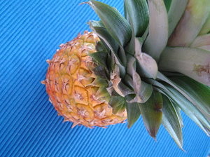 Pineapple 1: Pineapple on blue blanket