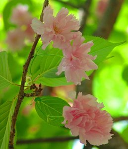Pink delight: Pink Flowers with green leaves.