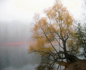 foggy willow at the lakeshore