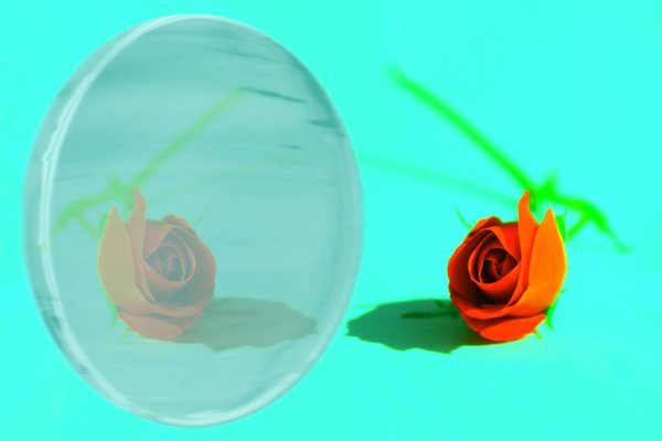 Reflection of Love: Narcissistic love. I created this image from a photo that I took of a flower in my garden. I used Microsoft Photodraw to help me to create this image.